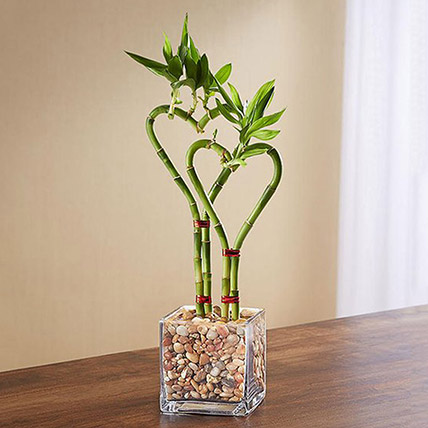 Heart Shaped Bamboo Plant In Glass Vase: Money Plant Singapore