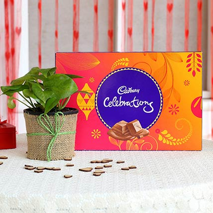Money Plant In Black Pot With Cadbury Celebrations: Deepavali Hampers