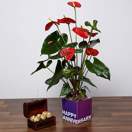Red Anthurium Plant and Chocolates For Birthday:  Gifts