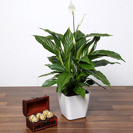 Amazing Peace Lily Plant and Chocolates: Outdoor Plants