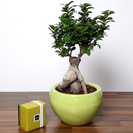 Bonsai Plant In Green Pot and Patchi Chocolates: Desktop Plants