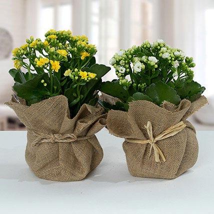 Jute Wrapped Dual Potted Plants: Flowering Plants Singapore