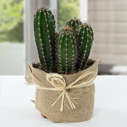 Cactus Jute Wrapped Potted Plant: Christmas Gifts for Sister
