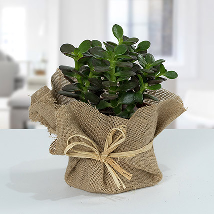 Crassula Minor with Jute Wrapped Pot: Unique Gifts for Girlfriend
