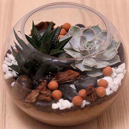 Decorative Succulents In Fish Bowl: Gifts for Employess