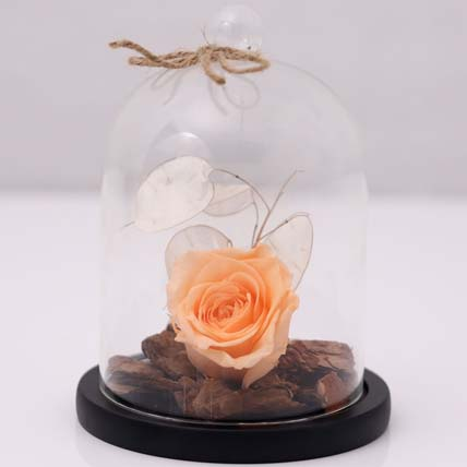 Peach Forever Rose In Glass Dome: One Hour Gifts Delivery