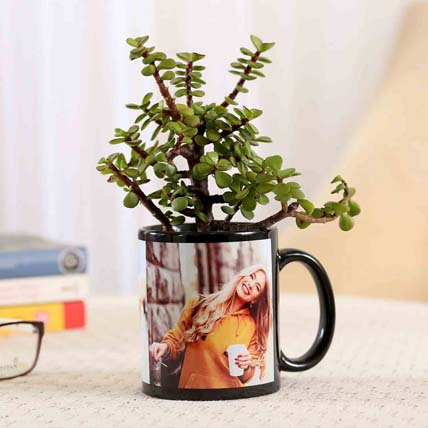 Jade Plant In Personalised Black Mug Combo: Jade Plants