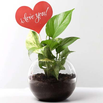 Love You Money Plant: Money Plants