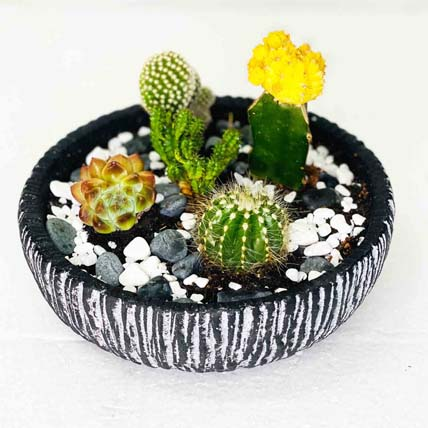 Cactus & Echeveria In Ceramic Bowl: Buy Plants