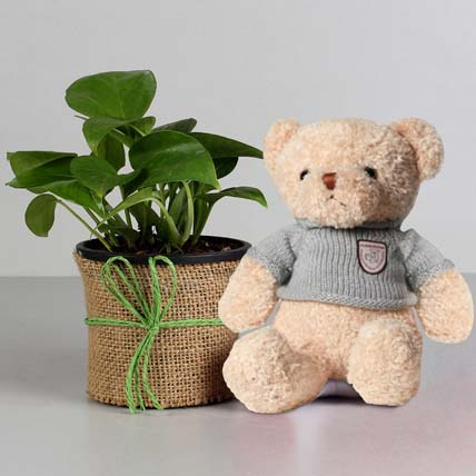 Money Plant in Black Pot with Teddy Bear: Plants