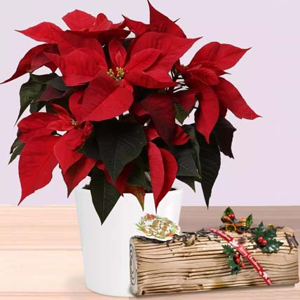 Poinsettia Plant In Wooden Vase with Chocolate log cake: Xmas Trees
