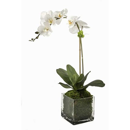Faux White Orchid Plant In Square Glass Vase: Orchid Plants Singapore