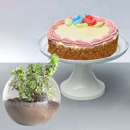Cheese Minicake With Jade Plant:
