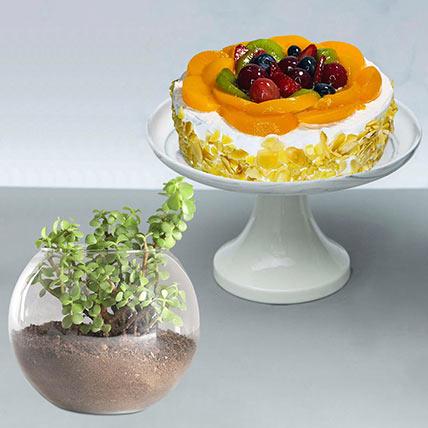 Fruit Cake With Jade Plant: Jade Plant Singapore