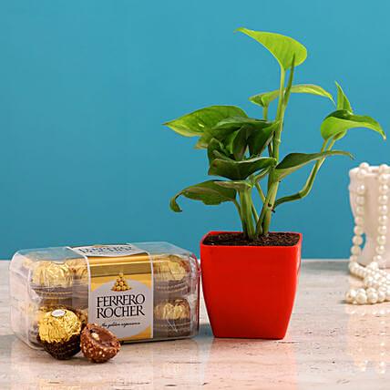 Money Plant And Ferrero Rocher Combo: Plants