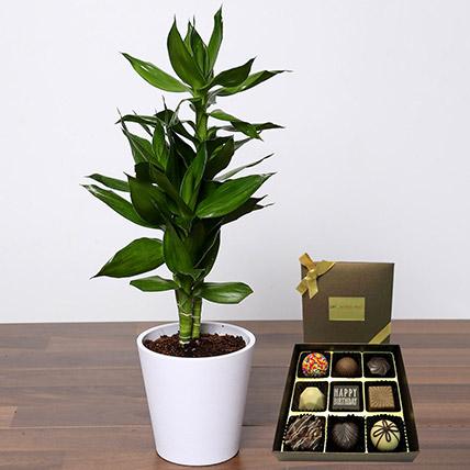 Dracaena Plant with Happy Birthday Chocolate: Plants N Chocolates