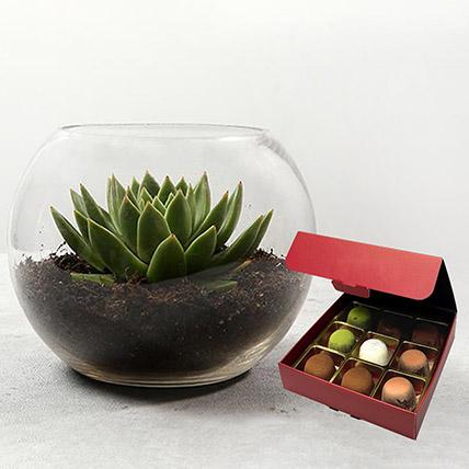 Green Echeveria with No Sugar Chocolate: Plants N Chocolates