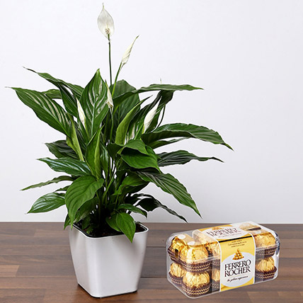 Lily Plant with Ferrero Rocher: Plants With Chocolates