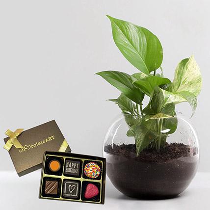 Money Plant with Artistic Birthday Chocolate: Plants N Chocolates