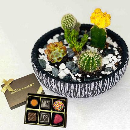 Cactus Echeveria with Artistic Birthday Chocolate: Plants N Chocolates