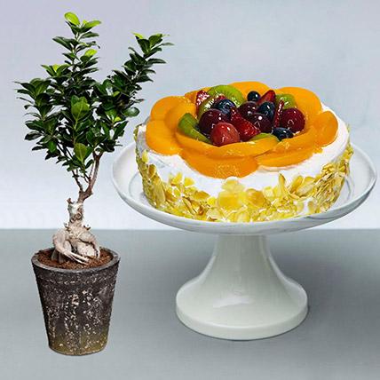 Fruit Cake with Ficus Bonsai Plant: Cakes N Plants