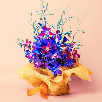 Gorgeous Orchids Arrangement: Gift Ideas