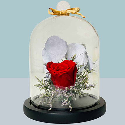Forever Rose In Glass Dome: Flower Bouquet