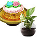 Cheese Minicake With Money Plant