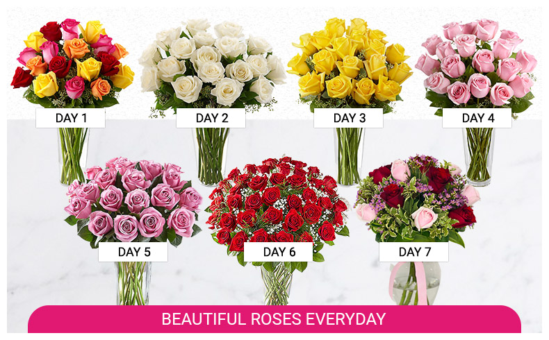 daily rose delivery