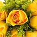 Bunch of Exotic Yellow Roses