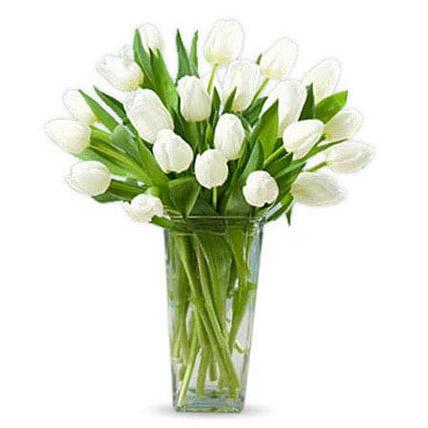 20 White Tulips KT