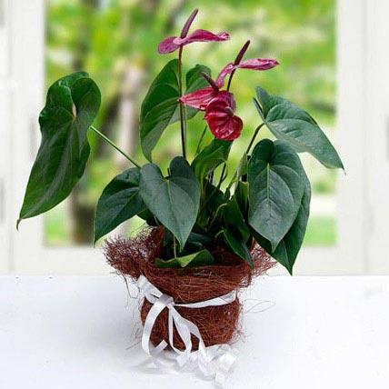 Simply Splendid Flowers