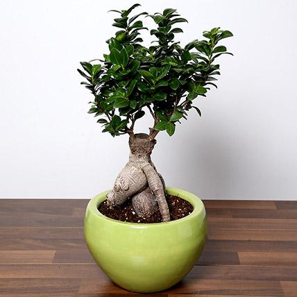 Bonsai Plant In Green Pot