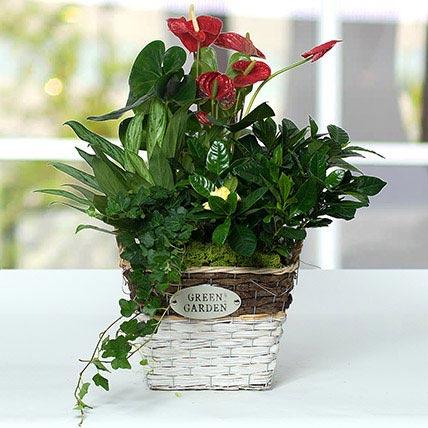 Mesmerising Green Basket Beauty