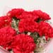 Blissful 8 Pink Carnations Bouquet