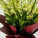 10 Green Mokara Orchids Bouquet
