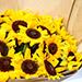 Sunny Hill 20 Sunflowers Bouquet