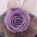 Purple Forever Rose In Glass Dome