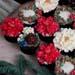 Santarina Belle Cupcake Set 6 Pcs